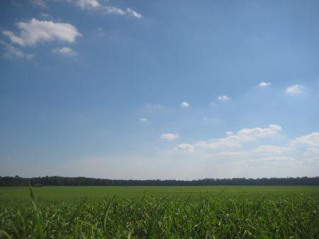 The Sheppard Farm : Americus : Sumter County : Georgia