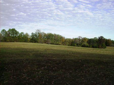 120 +/- Acres On Ragsdale Mountain : Morrilton : Conway County : Arkansas