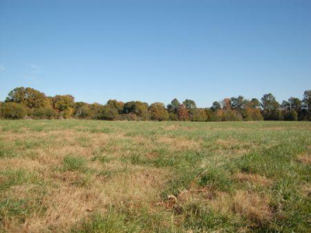20ac In Madison-pasture, Pond : Madison : Morgan County : Georgia