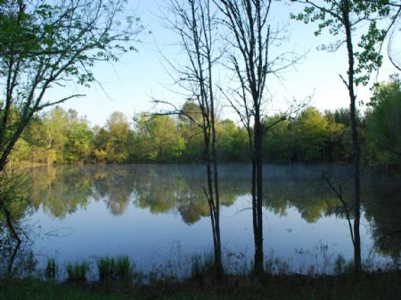 330.5 Acres With Pond And Hardwoods : Chester : South Carolina