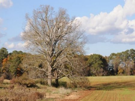 50.59 Acre Estate Tract : Americus : Sumter County : Georgia