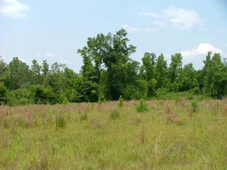 3.45 Acres : Wrightsville : Johnson County : Georgia