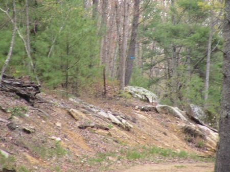 Acreage In The Blue Ridge Mts. : Independence : Grayson County : Virginia