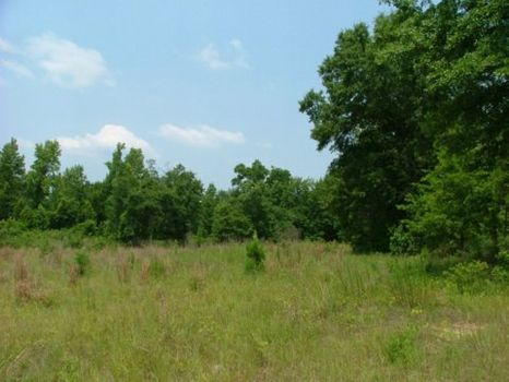 5 +/- Acres : Wrightsville : Johnson County : Georgia
