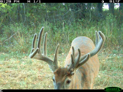 80 Acres, Great Hunting, Cozy Cabin : Barry : Pike County : Illinois