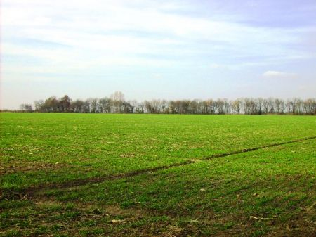221 +/- Acre Row Crop Farm : Keo : Lonoke County : Arkansas