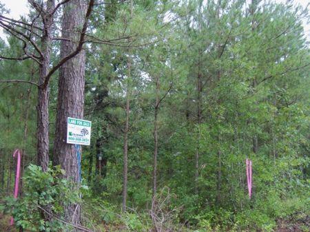 Expired locust bayou 20 tract land for sale locust bayou land description freerunsca Gallery