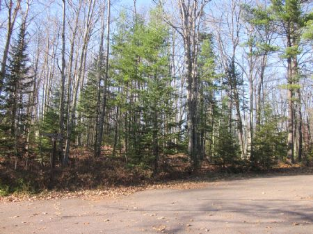 3.2ac Lot In Desirable Timb Ridge : Minoccqua : Oneida County : Wisconsin