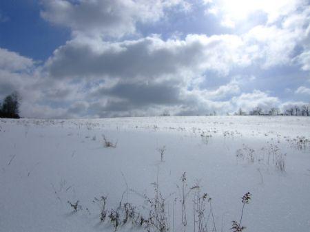 66+ Acres Farmland No Gas Lease : Willet : Cortland County : New York