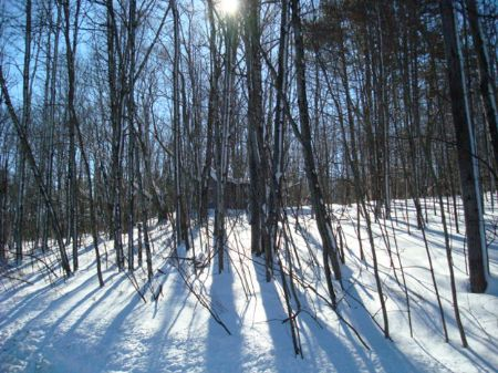 20+ Acres Bordered By State Forest : Richford : Tioga County : New York