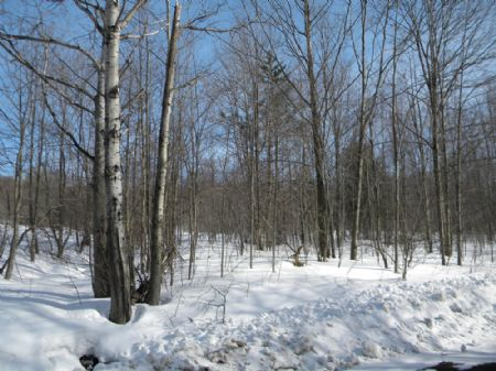 15 Wooded Acres Quite Country Area : Lapeer : Cortland County : New York