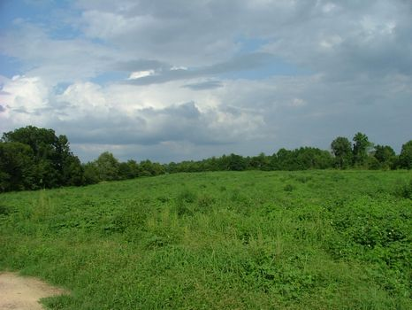 Beautiful Farmland with 2 Ponds : Sylvania : Screven County : Georgia