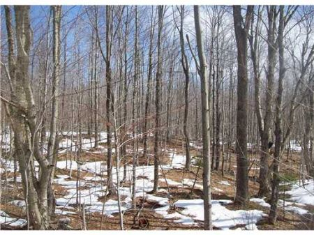 Great Hunting Parcel : Dover Foxcroft : Piscataquis County : Maine