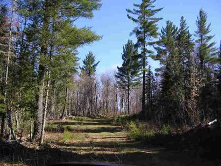 Off Craig Lake Rd 1058092 : Three Lakes : Baraga County : Michigan