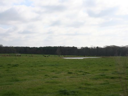 116 Acre Horse Or Cattle Farm : Forest : Scott County : Mississippi