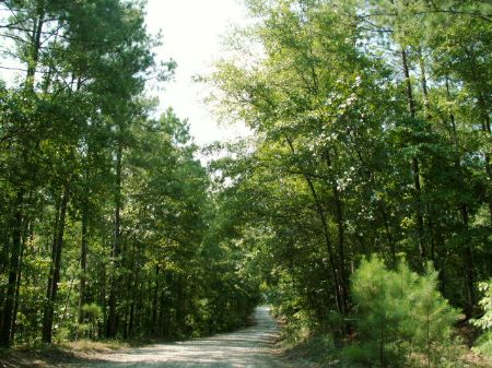 124.2 Ac On Glover Pond Rd. : Newnan : Coweta County : Georgia