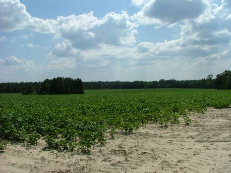 127 +/- Acres : Waynesboro : Burke County : Georgia
