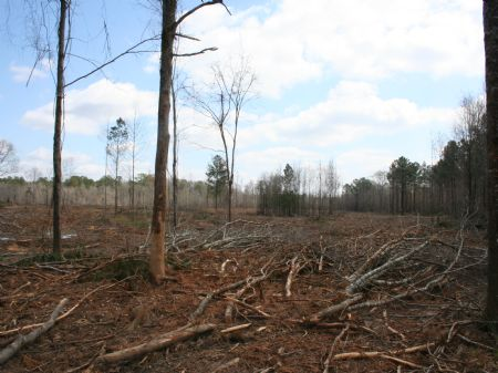 100 Acres Investment : Forest : Scott County : Mississippi