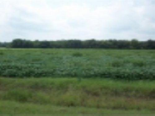 2.2 Acres, Bishopville : Bishopville : Lee County : South Carolina