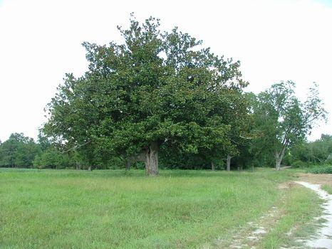 127 +/- Acres : Millen : Jenkins County : Georgia