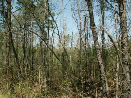 30.6 Acres On Joe Stephens Rd. : Franklin : Heard County : Georgia