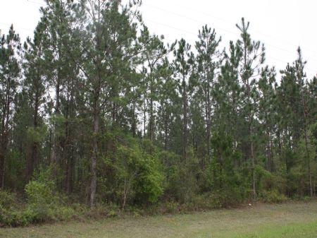 37 Ac, Jefferson County, Fl : Monticello : Jefferson County : Florida
