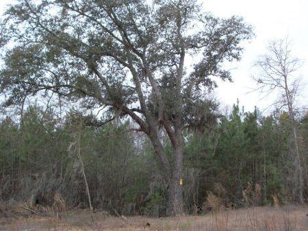 59 Acres, 147500 : Sumter : South Carolina