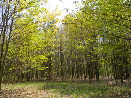 8+ Acre Wooded Building Lot Private : Ithaca : Tompkins County : New York