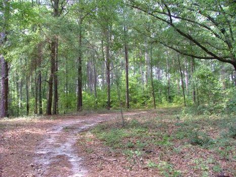 4 Acre Lot : Millen : Jenkins County : Georgia