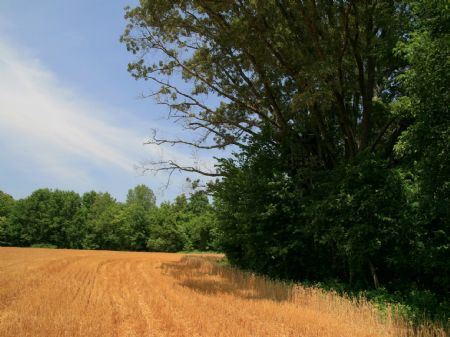 80 Acres Next To Ames Plantation : Hickory Valley : Fayette County : Tennessee
