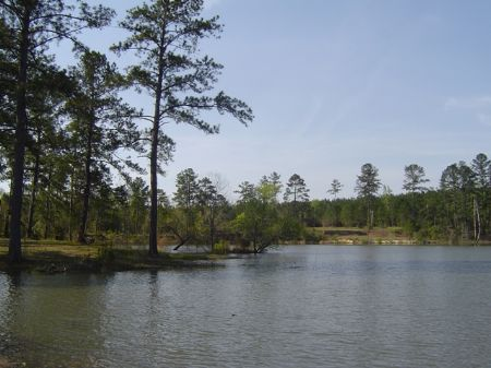 Beautiful 6 Acre Lake : Jeffersonville : Twiggs County : Georgia
