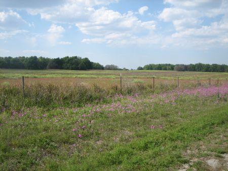 14.83 Acres - Commercial : Ocala : Marion County : Florida