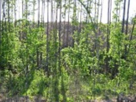 102 Acre Timber/ Recreation Tract : Chester : South Carolina