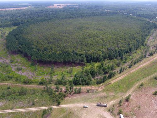 Pine Ridge Preserve : Blackville : Barnwell County : South Carolina