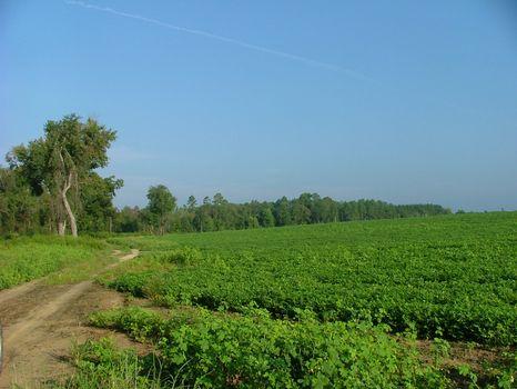 Bennett Farm | 188 Acres : Swainsboro : Emanuel County : Georgia