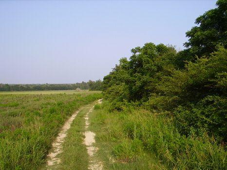 46.84 Acre Mini Farm : Statesboro : Bulloch County : Georgia