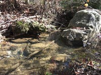 12.59 Acres, Homesites, Wooded : Pikeville : Bledsoe County : Tennessee