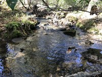 11.01 Acres, Stream, Homesites : Pikeville : Bledsoe County : Tennessee