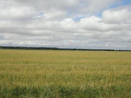 Wilson Farm : Mccrory : Woodruff County : Arkansas