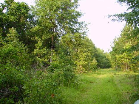 19 +/- Acre Mini Farm : Statesboro : Bulloch County : Georgia