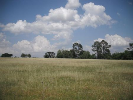 Mid-sized Cattle Or Horse Farm : Rochelle : Crisp County : Georgia
