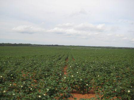 Prime Irrigated Farmland : Americus : Sumter County : Georgia