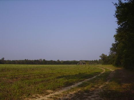 28 +/- Acre Mini Farm : Statesboro : Bulloch County : Georgia