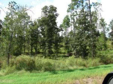 5.08  Acre Estate-sized Lot : Carriere : Pearl River County : Mississippi
