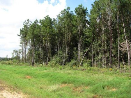 4.8 Acre Mol Estate-sized Lot : Carriere : Pearl River County : Mississippi