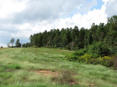 5.17 Acre Estate-sized Lot : Carriere : Pearl River County : Mississippi