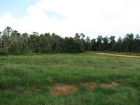 6.49 Acre Estate-sized Lot : Carriere : Pearl River County : Mississippi