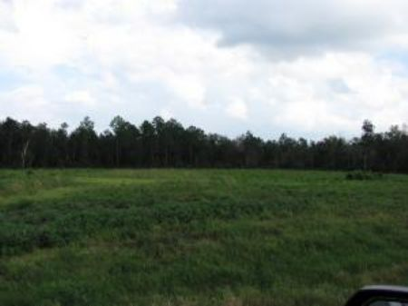 4.20 Acre Estate-sized Lot : Carriere : Pearl River County : Mississippi