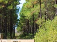 40 Acres On A County Maintained Rd : Waycross : Ware County : Georgia