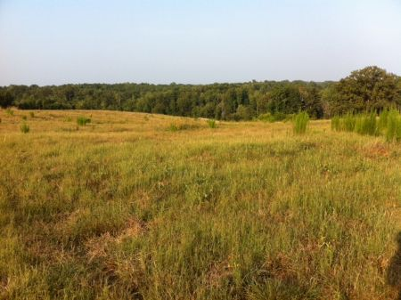 14.5 Acres In Woodland : Woodland : Randolph County : Alabama